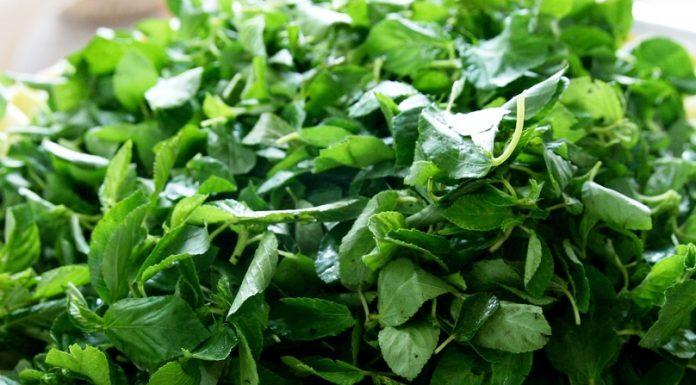 feuilles de Kplala